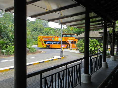 Sightseeing Bus in Singapore